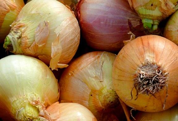 Importaciones de Cebolla Cabezona arruinan a los productores