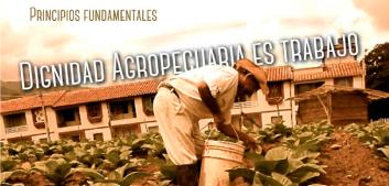 banner_principios_fundamentales