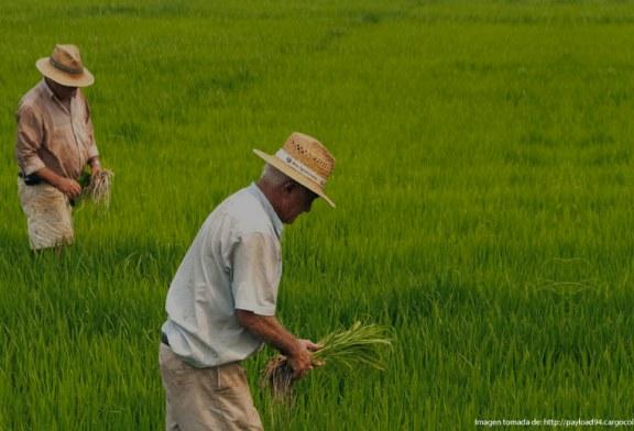 Carta de Dignidad Arrocera al Ministro de Agricultura sobre importaciones de arroz