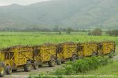 Las multas a los Ingenios Azucareros: Un paso más contra la producción agropecuaria