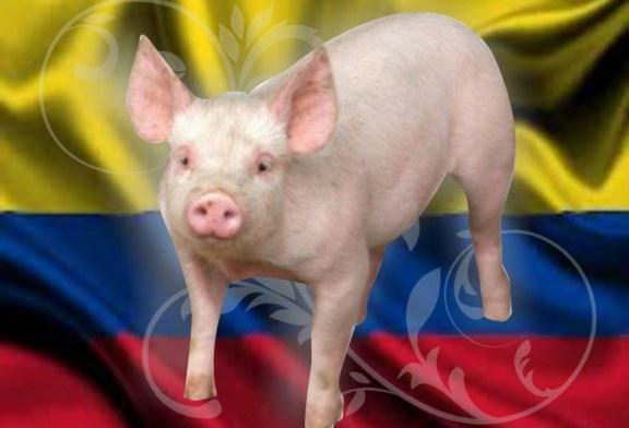 La pequeña y mediana porcicultura nacional en el TLC Colombia-Estados  Unidos: costos altos, exigencias altas y precios bajos.